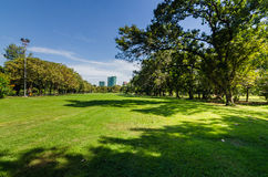 Park with shadow of green tree Royalty Free Stock Photo
