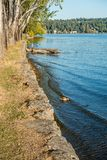 Park Shoreline Landscape 2 Stock Images