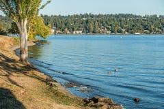 Park Shoreline Landscape 4 royalty free stock image