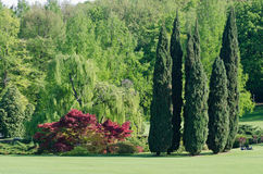 Park Sigurtà, valeggio sul Mincio Italy. Cypress trees in the park Sigurtà, valeggio sul Mincio Italy Royalty Free Stock Images