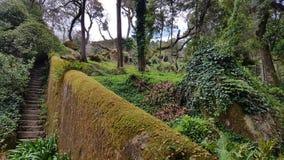 Park in Sintra. Quinta da Regaleria Stock Images