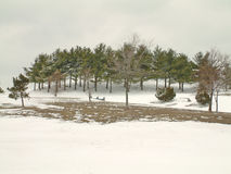 Park in the snow. Trees in a local park, covered in the winter's snow royalty free stock photo
