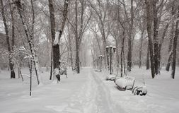 Park in the snow. lley in the park. Alley in the park. The earth, the path, the benches, the trees, the lanterns are covered with fresh, fluffy snow. Abakan Stock Images