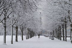 Park Snow Scene Royalty Free Stock Photography