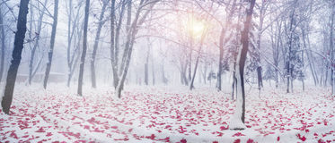 Park after a snow storm royalty free stock image