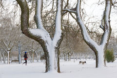 Park with Snow, Woman and Dog Running Stock Image