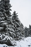 Park snowbound Royalty Free Stock Images