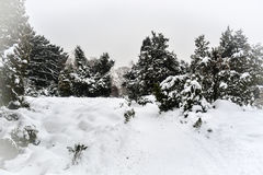 Park snowbound Royalty Free Stock Photography