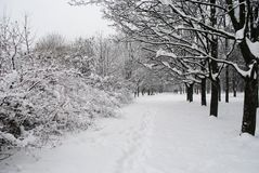 Park after a snowfall. Fluffy trees in parks after snowfall in Russia, a lot of snow, snowdrifts Royalty Free Stock Photo
