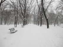 Park. Snowing in the park alley royalty free stock image