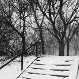 Park during snowstorm Royalty Free Stock Photography