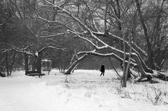 Park in snowy winter. Park in snowy winter weather Stock Image