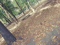 Park in Sofia Stock Afbeelding