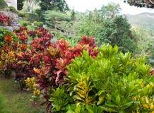 Park of Soroa (Jardin Botanico Orquideario Soroa), Cuba. Close up in a sunny day Stock Image