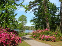 Park in spring. This is Greenfield park in the spring with azaleas blooming around April Stock Photo