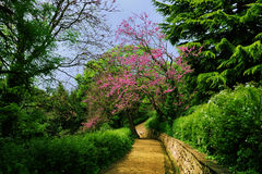 Park in the spring. Beautiful spring landscape - Vorontsov park with lush greenery and flowering trees, and paved walkway stretching into the distance, Alupka royalty free stock images