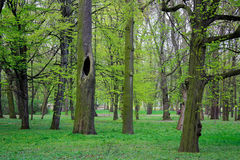 Park in spring. Park with green trees in spring Stock Images