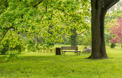 Park in Spring Stock Photography