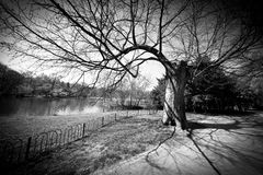 Park in the spring time Royalty Free Stock Photography