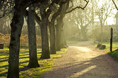 Park in spring time. Colorful park spring time, sunset Royalty Free Stock Photos