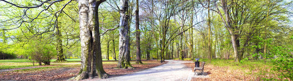 Park in spring time - panoramic view Stock Image