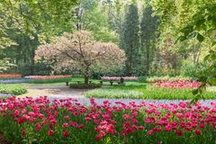 Park in The Spring Royalty Free Stock Image