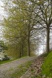 Park in spring Stock Image