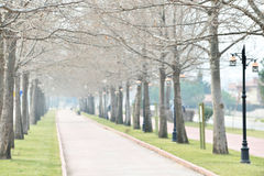 Park in spring Royalty Free Stock Photos