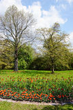 Park in springtime with tulip flowerbed Stock Photo