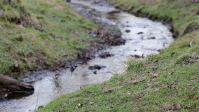 Park Stream with moss and grass - Beautiful English Countryside Nature Backgrounds stock video