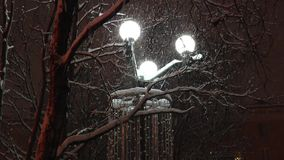 The park streetlight lighting the snow-covered trees and the falling   snow. stock video footage