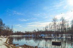 Park in the suburbs of St. Petersburg on a winter sunny day royalty free stock photo