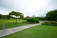 The park in summer. Was taken in xiamen of china, fujian province,the park in summer Royalty Free Stock Photography