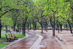 Park in summer rainy weather. Beautiful couple in rainy weather Royalty Free Stock Photos