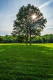 Park Sunlight Stock Images