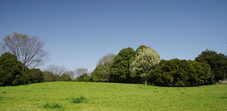 Park in a sunny day. Park landscape in a sunny day Stock Photos