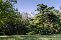 In the Park. Sunny day at the Park with mountain views Royalty Free Stock Image