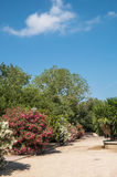 Park on a sunny day. Park in Palma de Mallorca, Spain, on a sunny day Stock Images