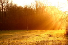 Park at sunrise A Royalty Free Stock Photo