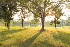 Park before sunset Royalty Free Stock Images