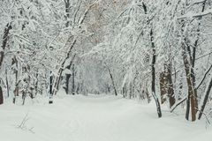 The park is surrounded by snow drifts after a heavy snowfall, a beautiful landscape. On a winter day stock photos