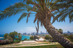 Park in Tel-Aviv Stock Images