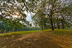 Park in Thailand. Green Park in Thailand Stock Image