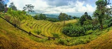 park thailand för pai för danghuainam nationell Royaltyfria Foton