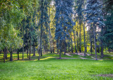 Park. In the Park there are trees of different species Stock Photography