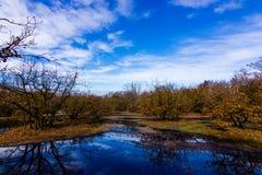 Park of Ticino Royalty Free Stock Photos