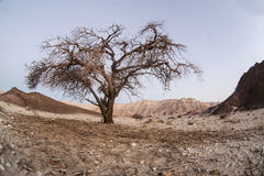 Park Timna  taken in Israel Royalty Free Stock Photography