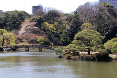 Park in Tokyo during blossom time Stock Photos