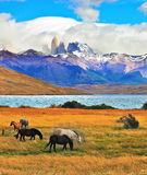 Park Torres del Paine Royalty Free Stock Photography