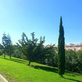 Park in Torrevieja Royalty Free Stock Photography